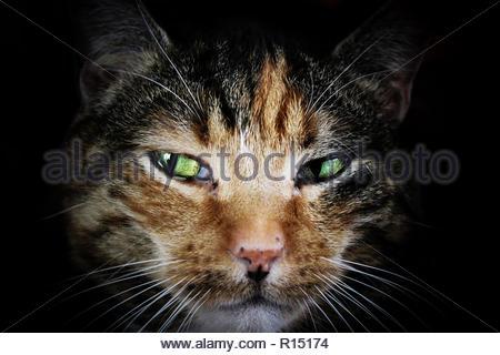 Cute cat closeup Foto Stock