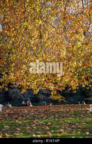 St James Park, London, Regno Unito. Il 13 novembre 2018. Autunno in London St James Park. Credito: Matteo Chattle/Alamy Live News Foto Stock