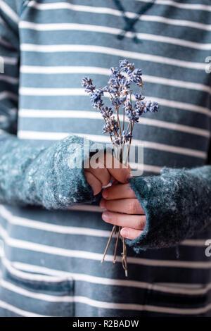 Mazzo di fiori di lavanda in mani Foto Stock