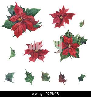 Acquerello poinsettia con Natale decorazioni floreali. Dipinto a mano tradizionale di fiori e piante: Holly, vischio, bacche e ramo di abete isolato su wh Foto Stock