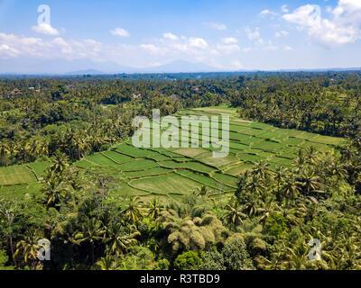 Indonesia Bali Ubud, vista aerea di campi di riso