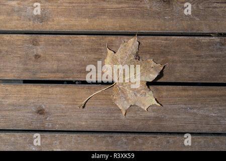 Colorati di foglie di acero. Frosty brown Foglie di autunno su sfondo di legno Foto Stock