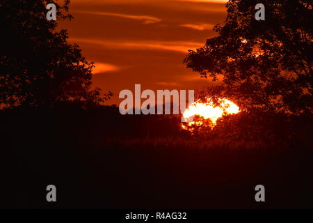 Tramonto nel Michigan. Prese con un teleobiettivo. Vi è un cornfield in primo piano insieme con la silhouette di alcuni alberi in un fencerow. Foto Stock