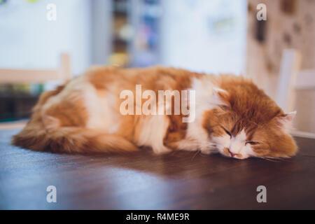 Carino gattino sedersi sul tavolo di legno in casa. Foto Stock