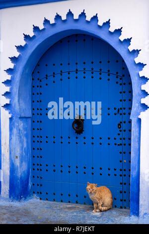 Il Marocco, Chefchaouen, città blu, Medina, cat nel blu dipinto di casa ad arco porta Foto Stock