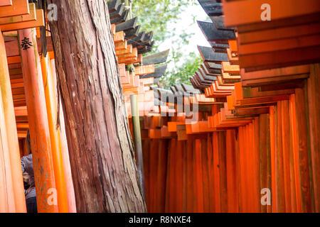 Vista insolita di Fushimi Inari Santuario torrii cancelli in Kyoto. Foto Stock