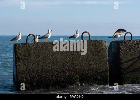Mare con due bagnato di blocchi in calcestruzzo in primo piano. in cinque blocchi di gabbiani Foto Stock