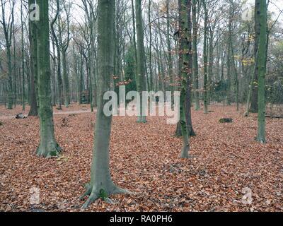 In autunno la foresta di colore verde con tronco di albero e marrone e foglie rosse di Amburgo, Germania.