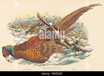 John Gould e W. Hart (British, attivo 1851 - 1898), Phasianus colchicus (anello colli) fagiano, colorate a mano reinventato