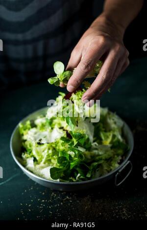 Primo piano di un giovane uomo caucasico circa per preparare un insalata con un mix di diverse foglie di insalata, come lattuga romana, indivia o rucola in un rustico di m Foto Stock