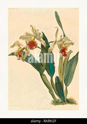 Gustav Leutzsch dopo Henry George Luna (tedesco (?), attivo del XIX secolo ), Cattleya Rex, litografia. Reinventato Foto Stock