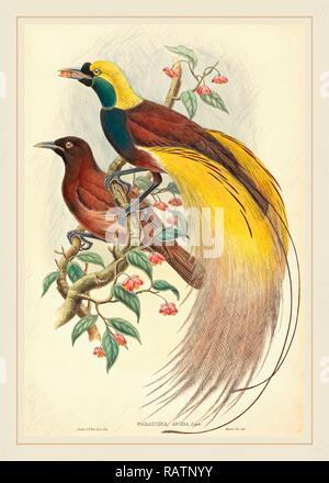 John Gould e W. Hart, British (1804-1881), uccello del paradiso (Paradisaea apoda), pubblicato 1875-1888, colorate a mano reinventato Foto Stock