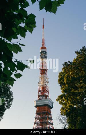La Torre di Tokyo inquadrata tra due alberi, Tokyo, Giappone Foto Stock