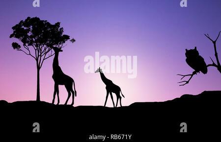 Illustrazione- astratta rappresentazione realistica di due adulti le giraffe al tramonto viola sul gradiente dello sfondo a sfondo di natura africana paesaggio. Foto Stock