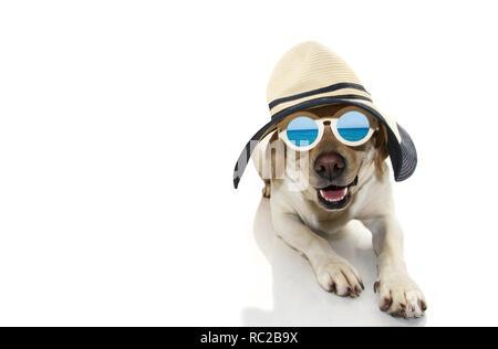 Cane estate. Il Labrador cucciolo vestito con occhiali da sole e cappello PAMELA PRONTA PER LA SPIAGGIA. Isolato colpo contro uno sfondo bianco. Foto Stock