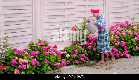 Donna cura dei fiori nel giardino. hydrangea. La primavera e l'estate. La cura dei fiori e irrigazione. suoli e fertilizzanti. donna felice giardiniere con fiori. Fiori di serra. Lavorando in ambiente verde Foto Stock