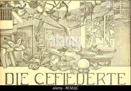 . Die Gefiederte Welt. Uccelli. sinistra 18. 18. Settembre 1919. Jahrgang XLVllI.. WELT Zeitschrift für .VOGELLIEBHABER. Begründet von Dr. Karl Ruß. Herausgegeben von Karl Neunzig in Hermsdorf bei Berlin. INHALT: Meine Zaunkönige. Von A. Martens, Oberpostassistent, Haspe (Westt.). (Fortsetzung.) Die Mohrenlerche - Alauda tatarica. Von Ingenieur W. kracht. Schattenseiten der Vogelptlege. Plauderei von |. Birk, Lipsia. (Fortsetzung.) Rohrsänger in der Umgebung von Danzig. Von Lothar Qribkowski. Kleine Mitteilungen. - Vogelschutz. - Sprechsaal. - Aus den Vereinen. - Redaktionsbrietkasten. Abonnementsp Foto Stock
