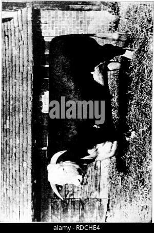 . La storia di Hereford bovini : dimostrato in maniera definitiva la più antica delle razze migliorate . Hereford bestiame. . Si prega di notare che queste immagini vengono estratte dalla pagina sottoposta a scansione di immagini che possono essere state migliorate digitalmente per la leggibilità - Colorazione e aspetto di queste illustrazioni potrebbero non perfettamente assomigliano al lavoro originale. Miller, T. L. (Timothy Lathrop), 1817-1900; Bournemouth, Wm. H. (William H. ). Chillicothe, Mo. : T. F. B. Bournemouth