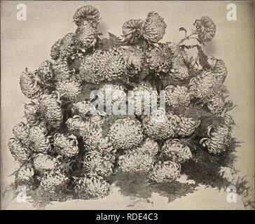 . E. G. Hill & Co., commercio all'ingrosso fioristi. Vivai (orticoltura) Indiana Richmond cataloghi; fiori Semi cataloghi; fiori piantine cataloghi. 10 E. G. HILL 6- CO., Richmond, ho/VD.. EUGENE DAILLEDOUZE. hpysanthemums. L'anno 1893 passa alla storia, con '37 e '53, come una spaventosa anno finanziariamente, ma mai prima di avere il nostro crisantemo mostra ha segnato un così grande successo. Quasi senza eccezione hanno pagato le spese e lasciato un saldo in tesoreria. Nella principale mostra i giudici sono stati estremamente esigente e hanno trattenuto interamente i premi dove la mostra è sceso al di sotto del Foto Stock