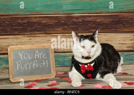 Un adorabile gatto vestito il giorno di San Valentino Foto Stock