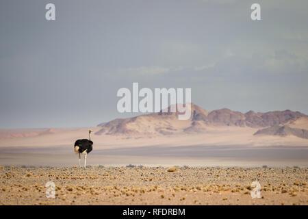Il mondo ultraterreno dune e dei paesaggi del deserto di Namib-Naukluft Parco Nazionale di fare una bella gita in giornata da Sesriem camp sul bordo del Namib Foto Stock