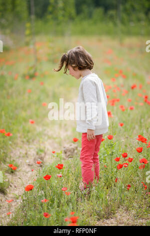 Carino bambina di quattro anni per divertirsi in un campo di semi di papavero Foto Stock