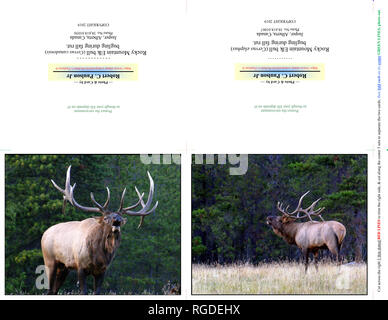 38,618.01056-b & 38,618.01067 Fotografia Foto Nota Card Carte, due 5x4 orizzontale su 11x8,5 carta (print cut piega), Bull elk bugling rientrano nel solco Foto Stock