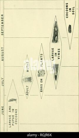 . Bollettino - Massachusetts Stazione di Esperimento Agricola. L'agricoltura. . Si prega di notare che queste immagini vengono estratte dalla pagina sottoposta a scansione di immagini che possono essere state migliorate digitalmente per la leggibilità - Colorazione e aspetto di queste illustrazioni potrebbero non perfettamente assomigliano al lavoro originale. Massachusetts Stazione di Esperimento Agricola. Amherst, Massachusetts : Stazione di Esperimento Agricola, 1907-1974