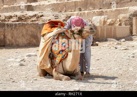 Bedouin con cammello per turisti vicino a piramidi a Giza deserto, Egitto Foto Stock