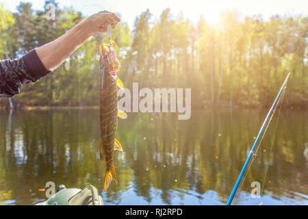 La pesca turismo di camping relax viaggio uno stile di vita attivo adventure concept. Mano del pescatore con pesce pike sullo sfondo della splendida natura e lago o fiume Foto Stock