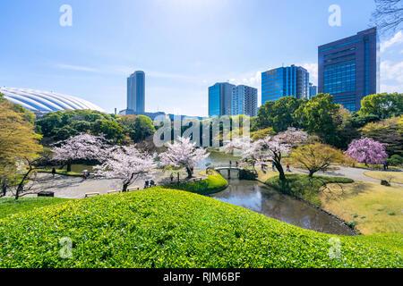Koishikawa Korakuen Garden è popolare di fiori di ciliegio spot in Tokyo, Giappone. Foto Stock