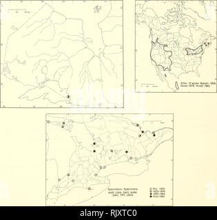 . Atlas delle rare piante vascolari di Ontario. Piante rare; Botanica. Atlas delle rare piante vascolari di Ontario / Atlas des plantes vasculaires rares de l'Ontario ERICACEAE Pterospora andromedea Nutt. Pine-gocce Ptérospore Andromeda. Campioni / Spécimens AAR, può, DAO, prosciutto, GAG, TRT, UWO O Pre 1925 © 1925-1949 9 1950-1964 • Posf1964 HABITAT: mescolati e boschi di latifoglie. Stato: Rare in Alberta, Nuovo Brunswicl<, Quebec, e del Saskatchewan. Possibilmente estirpare in New Hampshire e New York; in via di estinzione in Texas e Wisconsin; raro in Nevada e Vernnont. HABITAT: Forêts de peuplement mélangé et