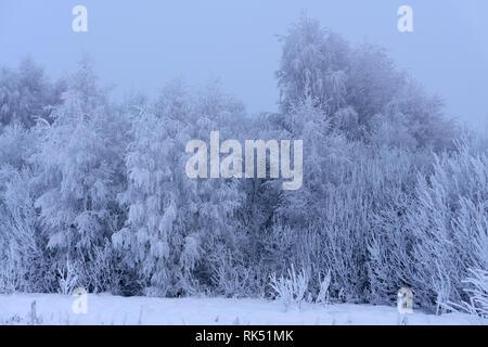 Ottobre mountain foresta di faggio bordo e prima neve invernale . Foto Stock
