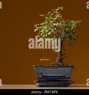 Un piccolo bonsai albero piantato in un pot nero con swing giallo, sfondo marrone Foto Stock