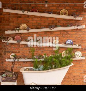 Uso creativo delle grondaie e un vecchio bagno per creare un muro di succulenti giardino. Foto Stock