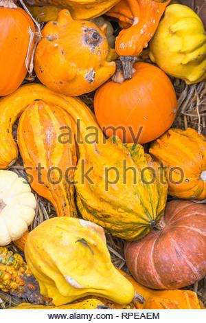 Grande varietà di zucche di forme diverse in vendita a Campo de' Fiori Mercato, Roma, Italia. Foto Stock