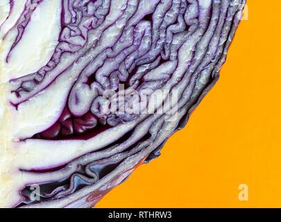 Macro di rivelare i dettagli di vorticazione in una fetta di cavolo viola su uno sfondo arancione. Foto Stock