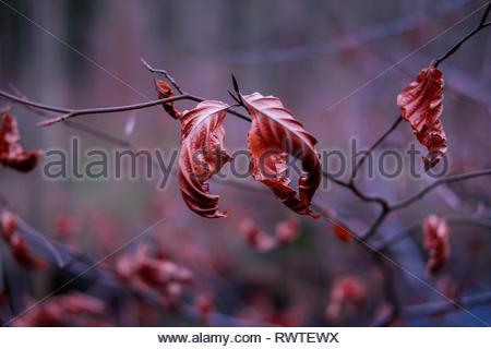 Autunno foglie colorate, foglie Foto Stock
