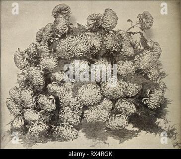 E G Hill & Co, E. G. Hill &; Co., commercio all'ingrosso fioristi eghillcowholesal1894ehhi Anno: 1894 10 E. G. HILL 6- CO., Richmond, ho/VD. EUGENE DAILLEDOUZE. hpysanthemums. L'anno 1893 passa alla storia, con '37 e '53, come una spaventosa anno finanziariamente, ma mai prima di avere il nostro crisantemo mostra ha segnato un così grande successo. Quasi senza eccezione hanno pagato le spese e lasciato un saldo in tesoreria. Nella principale mostra i giudici sono stati estremamente esigente e hanno trattenuto interamente i premi dove la mostra è sceso al di sotto delle loro idee di eccellenza per cui essi dovrebbero essere com- mend Foto Stock