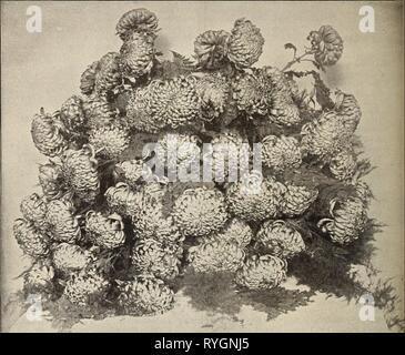E. G. Hill & Co., commercio all'ingrosso fioristi eghillcowholesal1894ehhi Anno: 1894 10 E. G. HILL 6- CO., Richmond, ho/VD. EUGENE DAILLEDOUZE. hpysanthemums. L'anno 1893 passa alla storia, con '37 e '53, come una spaventosa anno finanziariamente, ma mai prima di avere il nostro crisantemo mostra ha segnato un così grande successo. Quasi senza eccezione hanno pagato le spese e lasciato un saldo in tesoreria. Nella principale mostra i giudici sono stati estremamente esigente e hanno trattenuto interamente i premi dove la mostra è sceso al di sotto delle loro idee di eccellenza per cui essi dovrebbero essere com- sanati. Nel giudicare Foto Stock