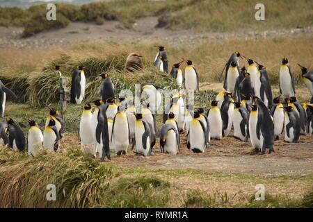 I pinguini in Punta Arena, Patagonia, Argentina, Sud America