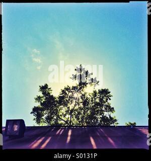 Suburban albero con il sole che splende attraverso di esso Foto Stock