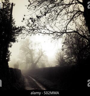 Alberi nella nebbia Foto Stock