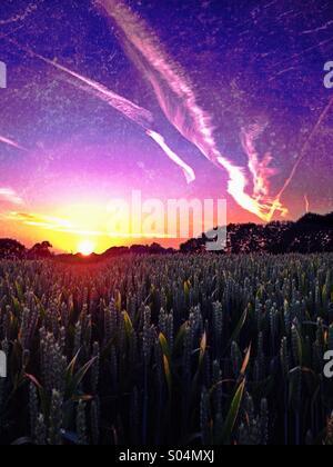 Tramonto su campo di grano Foto Stock