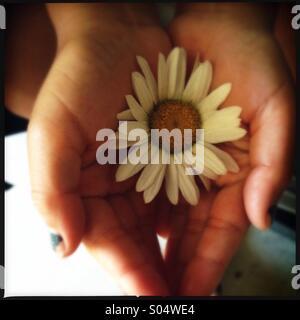 Mano che tiene i fiori Foto Stock
