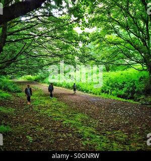Tre persone a piedi nei boschi a Malvern Hills Foto Stock