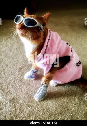 Cool cat vestito con occhiali da sole, stivali e felpa con cappuccio di colore rosa Foto Stock