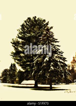Inverno tranquilla scena di neve. Snow tagliati alberi sempreverdi. Coperta di neve cottage in distanza. Le ombre Foto Stock