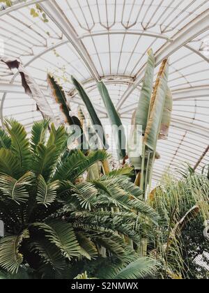 Foglie giganti e palme in serra a Kew Gardens Foto Stock