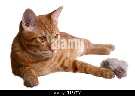 Lo zenzero gattino posa con un pelo grigio giocattolo del mouse